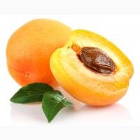 Куплю абрикосы на переработку