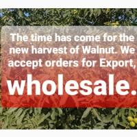 Nuts all Ukraine принимаем заказы на ядро Грецкого ореха. Ждем звонков