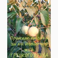 Nuts all Ukraine принимаем заказы на Грецкий орех калибра: 28+, имеем обьемы в наличии