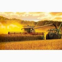 Закупаем зерновые культуры крупным оптом по територии Украины.Пшеница