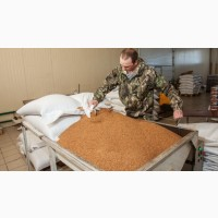 Купуемо зерно гречки Сои будьякий регiон, можливо самовивiз