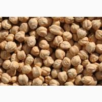 Семена нута «Азкан» Турция, «Ричардсон» США
