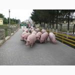 Продам комбикорм для свиней