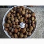 Продам фундук, лесной орех, лещину 2020