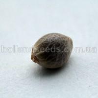 Семена для посева
