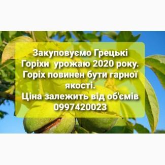 Закуповуємо грецькі горіхи нового урожаю
