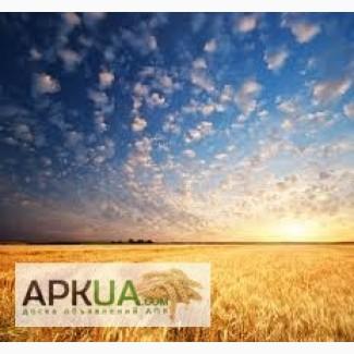 Купим Зерно пшеницы