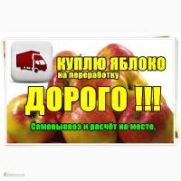 Закупаем яблоко на соки и пюре по всей Украине
