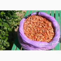 Черноморская мелкая креветка