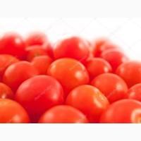 Продам томаты оптом до 20 тонн в день