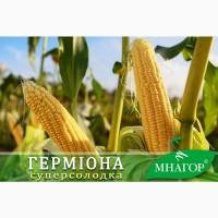 Семена сладкой кукурузы Гермиона F 1, 100000, Мнагор, суперсладкая 23%
