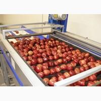 Услуги по Переборке, Фасовке, Упаковке всех видов овощей и фруктов