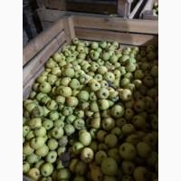 Яблоко 2 сорта продам оптом