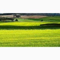 Куплю земли сельхозназначения в Харьковской области