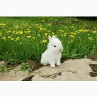 Продам полнорационный комбикорм для кроликов