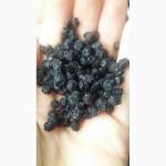 Продам сухую чернику урожай 2016