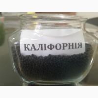 Семена озимого рапса :Калифорния, Вапиано, Дангал, Черемош, Чемпион Украины