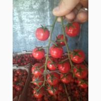 Продую томат черри Порпора
