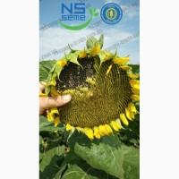 Семена подсолнечника под Гранстар Сумо, НСХ 7370, НСХ 1749