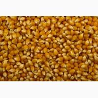 Закупаем пшеницу