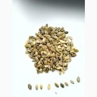 Ядро гарбузового насіння