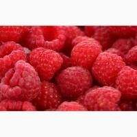Закупаем оптом ягоду малину