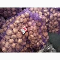 Продажа товарного картофеля крупным оптом