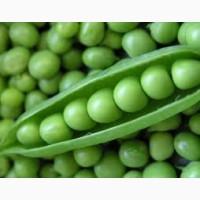 Семена зеленого гороха ЗЕКОН 1 репрод