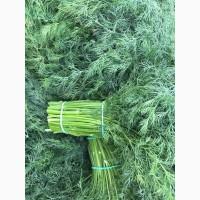 Продам всегда в наличии свежую зелень