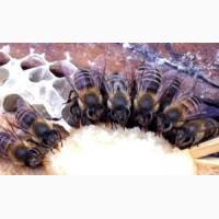 Белково - витаминная добавка для пчел