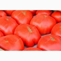 Компания заключает договор на поставку помидоров