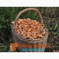 Рыжики грибы замороженные