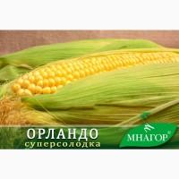Насіння цукрової кукурудзи Орландо F1, сахарная кукуруза, 78-80 днів