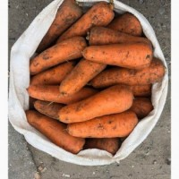 Продам Морковь АБАКО в Закарпатті