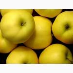 Продам яблоки Голден и др, 2016 урожай, доставка, оформляем договора, опт