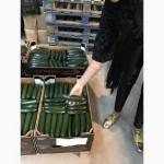 Продаем кабачки из Испании