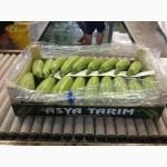Продам оптом фрукты и овощи