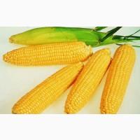 Купим Кукурузу нового Урожая.Звоните