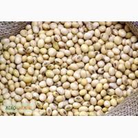 Продам семена сои от 500 кг., Черкассы, сорт «Аполло»