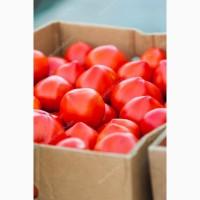 Заключим договор на поставку розовых помидоров