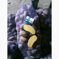 Продам картошку фракция 5