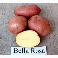Продам семенной и товарный картофель