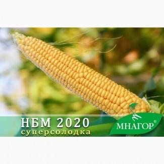Семена кукурузы НБМ 2020 F1