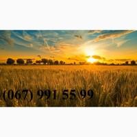 Возьму в аренду землю сельхозназначения