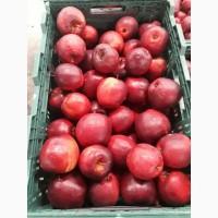 Продам яблоко от производителя
