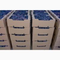 Продам столовый виноград - киш миш Юпитер