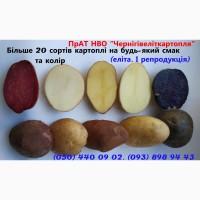 Картопля насіннева напряму від виробника, продаж посадкової картоплі