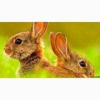 Продам универсальный корм для кролей