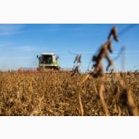 Уборка льна кукурузы подсолнечника соняшника сои Красилов Хмельницкий Летичев Нетишин