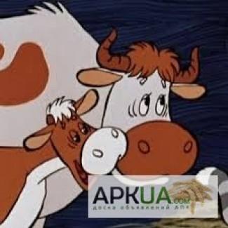 Сухое молоко Лактофит-Т для телят